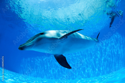 Dolphin swims under the water