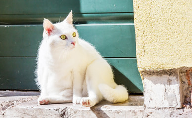 White beautiful cat siting at the foot of a door
