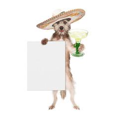 Fototapete - Dog Wearing Sombrero Holding Margarita and Sign