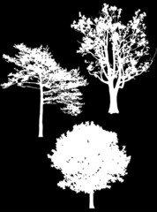 three isolated white trees silhouettes