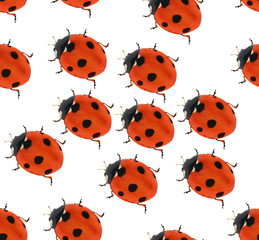 seven ponts ladybug seamlesse background