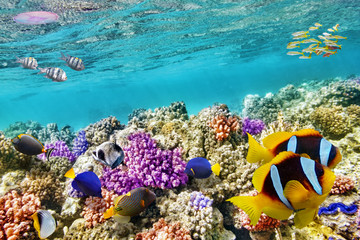 Wall Mural - Underwater world with corals and tropical fish.