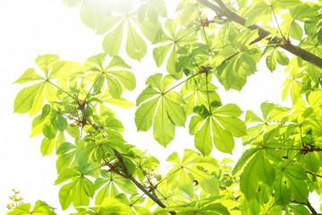 Beautiful tree twigs with sun rays
