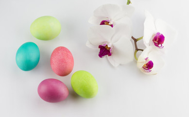 Colorful painted Easter eggs with orchid on white background