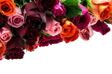 Bouquet of multi-colored roses isolated on white