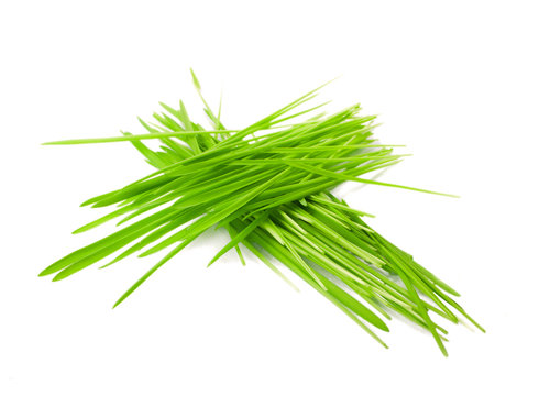 green grass in bundles isolated on white
