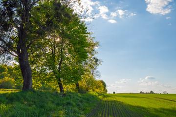 summer landscape field