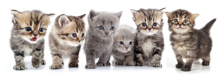 portrait of large group of kittens against white background