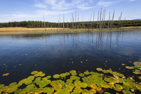 Lake Water Trees Lil-lies Landscape