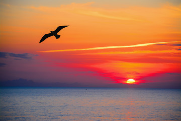 seagull silhouette in an orange sky