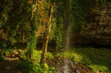 Wasserfall im Dorrigo National Park, Australien