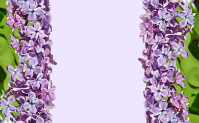 Frame for pictures with lilac flowers