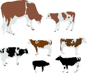 cows and calf color vector silhouette