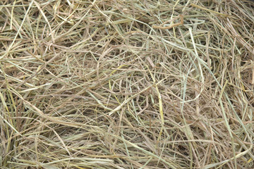 Background Dry Grass