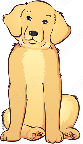 Golden Retriever Welpe Stock Image And Royalty Free Vector Files On