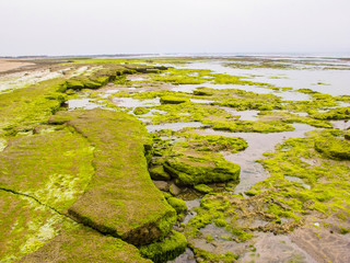 boulders covered with algae on the Atlantic coast, Morocco