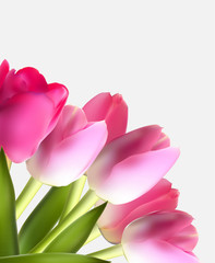 Beautiful Pink Realistic Tulip Background Vector Illustration EP