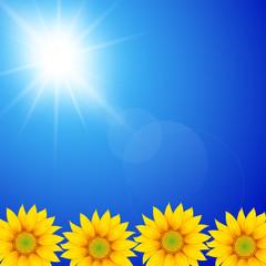 Sunflower in sunny sky background