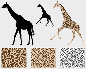 Silhouette of giraffes and detailed skin, vector illustration