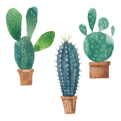 Cactus isolated on white background. Vector, watercolor hand dra