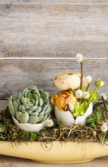 Fototapete - Easter table decoration with succulents and ranunculus flower