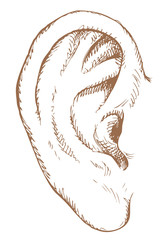 Human ear. Vector sketch