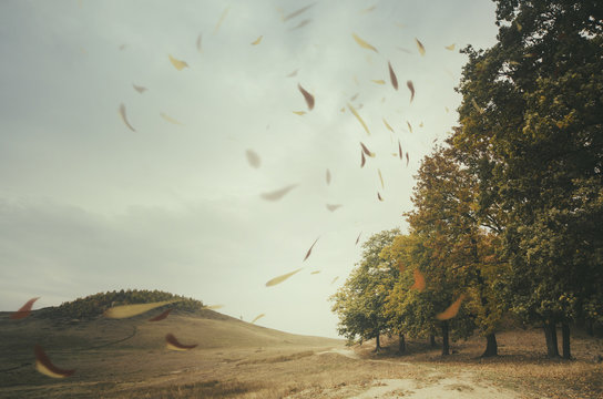 edge of forest with leaves blown by wind
