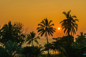 Romantic yellow sunset on a Caribbean beach full of tall palm