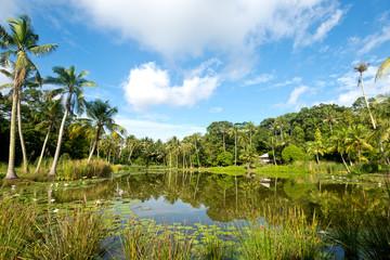 Pond Scene on Pulau Ubn, Singapore