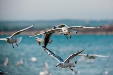 Birds of the sea