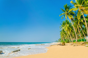 Amazing view of exotic sandy beach with high palm trees against