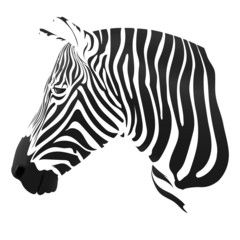 the Zebra stripes on white