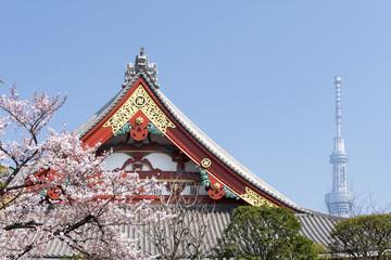 浅草 浅草寺 満開の桜と東京スカイツリー