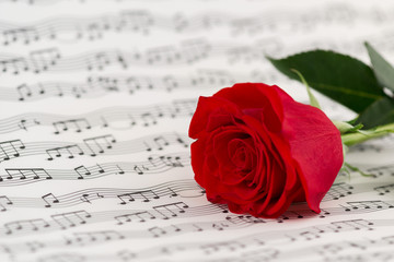 roses and music sheets - selective focus