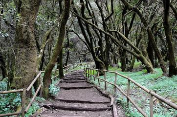 National Park Garajonay in Laguna Grande, La Gomera