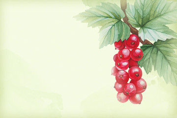 Watercolor illustrations of red currants