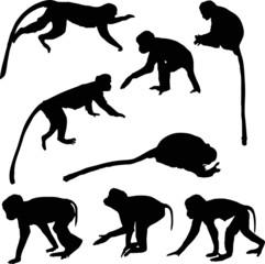 eight isolated monkey black silhouettes