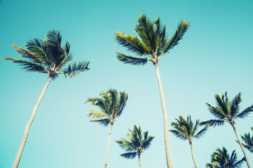 Palm trees over clear sky background. Vintage style