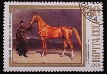 Moscow, USSR-CIRCA 1988: Postage stamp Sardar stallion