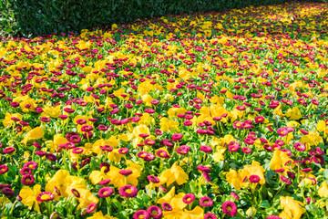 Ein Garten voller pinke und gelbe Blumen