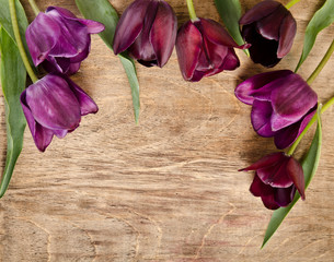 frame for photo from fresh tulips.