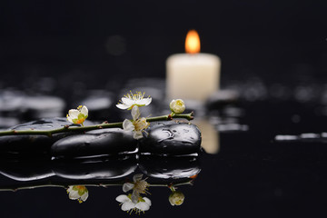 branch with blossoms with white candle on black stones