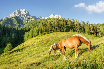 Mountain pasture with horses