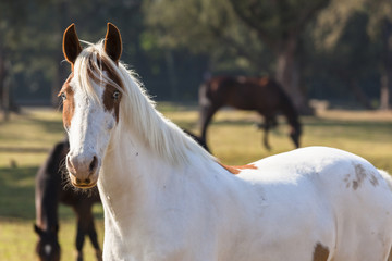 Horse Blue Eyes Portrait