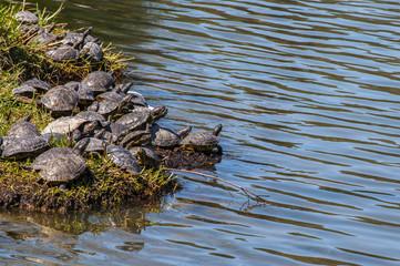 Cerca immagini animali acquatici for Stagno tartarughe