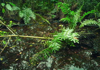 Wild tropical forest landscape with green plants in water