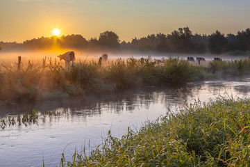 Dinkel River and cows
