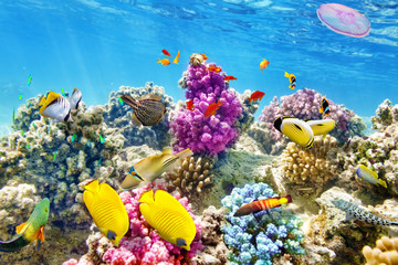 Aluminium Prints Under water Underwater world with corals and tropical fish.