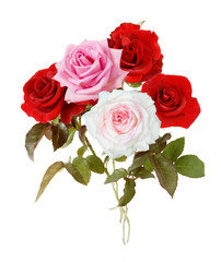 Bunch of pink,red and white roses isolated