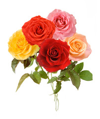 Bunch of pink and red, yellow  roses on white